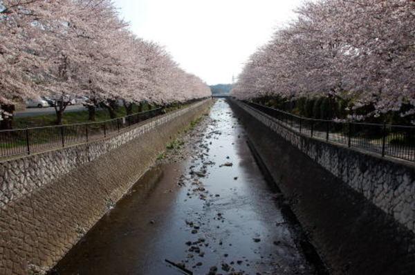 今週は桜🌸を見ながらナイトラン!